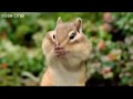 Beatboxing Chipmunk - Walk on the Wild Side