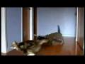 Tokyo drift cats