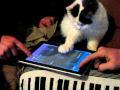 Ipad Cat